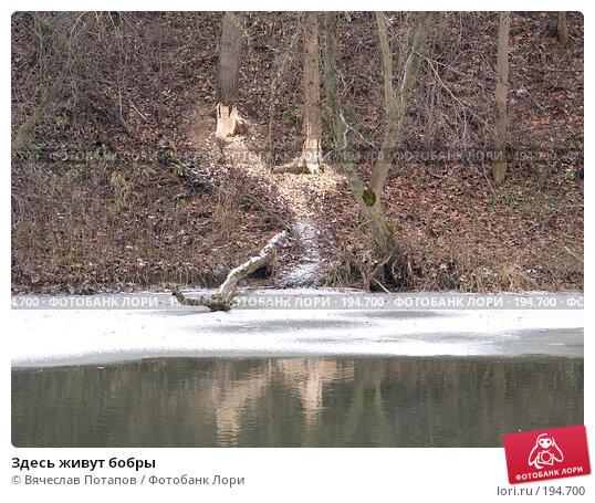 Здесь живут бобры, фото № 194700, снято 11 ноября 2007 г. (c) Вячеслав Потапов / Фотобанк Лори