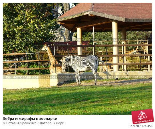 Зебра и жирафы в зоопарке, фото № 174456, снято 23 сентября 2006 г. (c) Наталья Ярошенко / Фотобанк Лори