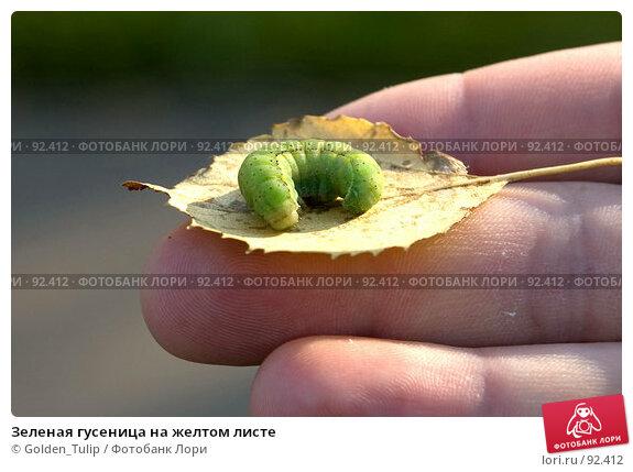 Зеленая гусеница на желтом листе, фото № 92412, снято 30 сентября 2007 г. (c) Golden_Tulip / Фотобанк Лори