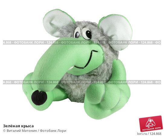 Зелёная крыса, фото № 124868, снято 14 ноября 2007 г. (c) Виталий Матонин / Фотобанк Лори