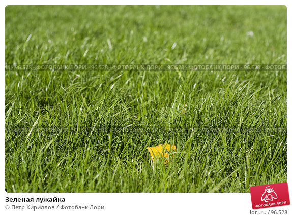 Зеленая лужайка, фото № 96528, снято 10 октября 2007 г. (c) Петр Кириллов / Фотобанк Лори