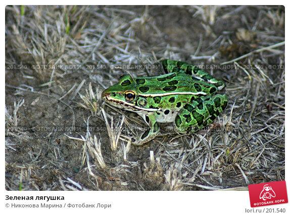 Зеленая лягушка, фото № 201540, снято 4 августа 2006 г. (c) Никонова Марина / Фотобанк Лори