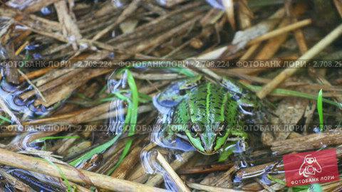 Купить «Зеленая лягушка», видеоролик № 2708224, снято 5 сентября 2010 г. (c) Алексас Кведорас / Фотобанк Лори