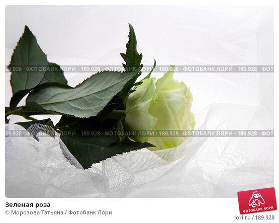 Зеленая роза, фото № 189928, снято 14 января 2008 г. (c) Морозова Татьяна / Фотобанк Лори