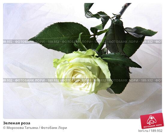 Зеленая роза, фото № 189932, снято 14 января 2008 г. (c) Морозова Татьяна / Фотобанк Лори