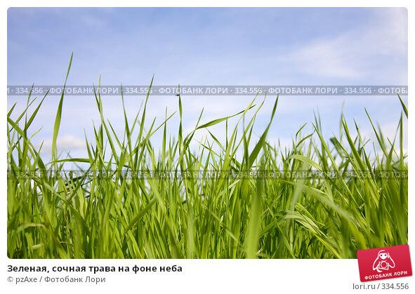 Зеленая, сочная трава на фоне неба, фото № 334556, снято 22 июня 2008 г. (c) pzAxe / Фотобанк Лори