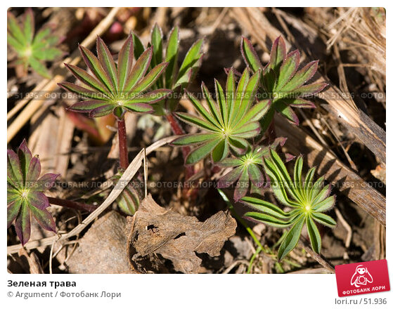Зеленая трава, фото № 51936, снято 14 апреля 2007 г. (c) Argument / Фотобанк Лори