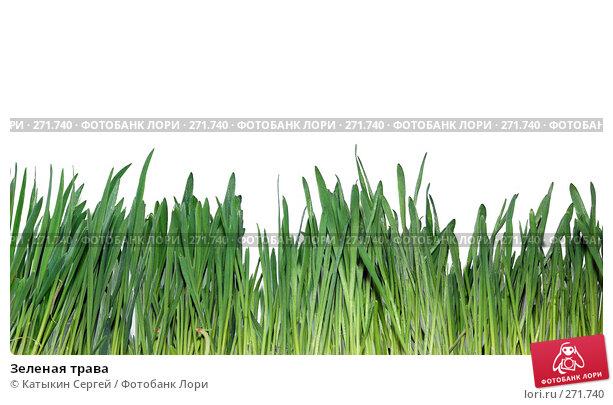 Зеленая трава, фото № 271740, снято 15 марта 2008 г. (c) Катыкин Сергей / Фотобанк Лори
