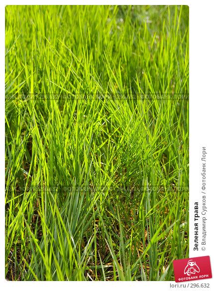 Зеленая трава, фото № 296632, снято 9 мая 2008 г. (c) Владимир Сурков / Фотобанк Лори