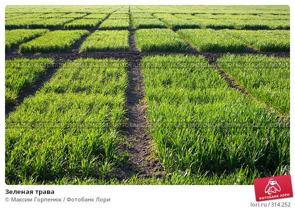 Зеленая трава, фото № 314252, снято 15 апреля 2007 г. (c) Максим Горпенюк / Фотобанк Лори