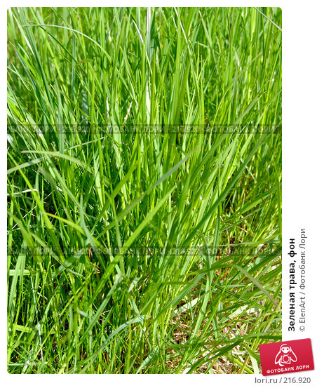 Зеленая трава, фон, фото № 216920, снято 21 июля 2017 г. (c) ElenArt / Фотобанк Лори