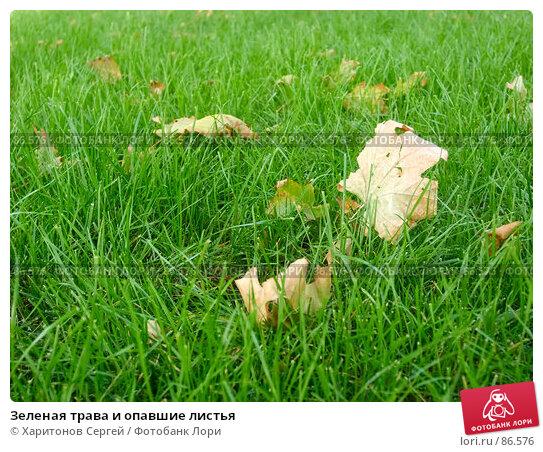 Зеленая трава и опавшие листья, фото № 86576, снято 21 сентября 2007 г. (c) Харитонов Сергей / Фотобанк Лори