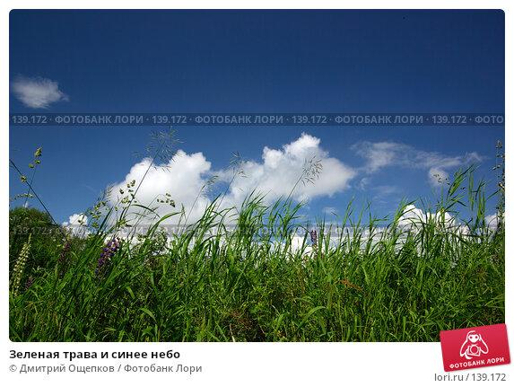 Зеленая трава и синее небо, фото № 139172, снято 1 июля 2007 г. (c) Дмитрий Ощепков / Фотобанк Лори