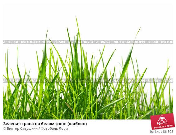 Зеленая трава на белом фоне (шаблон), фото № 86508, снято 26 марта 2017 г. (c) Виктор Савушкин / Фотобанк Лори