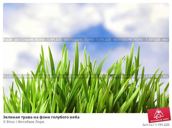 Купить «Зеленая трава на фоне голубого неба», фото № 1191620, снято 19 марта 2007 г. (c) Elnur / Фотобанк Лори