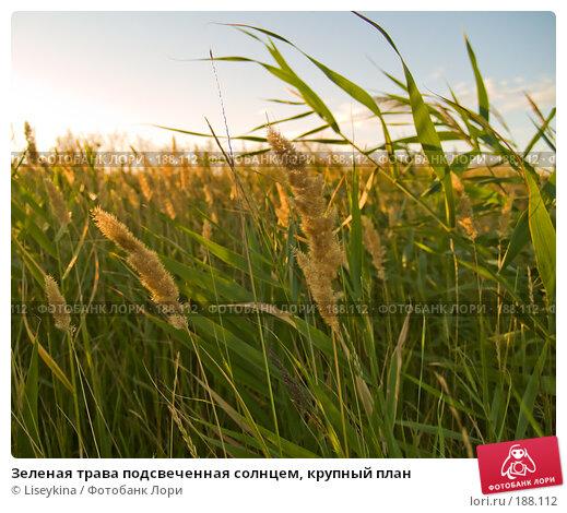 Зеленая трава подсвеченная солнцем, крупный план, фото № 188112, снято 10 августа 2007 г. (c) Liseykina / Фотобанк Лори