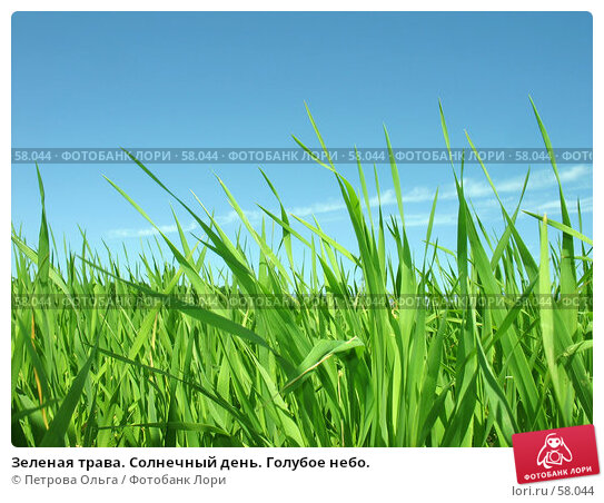 Зеленая трава. Солнечный день. Голубое небо., фото № 58044, снято 3 июня 2007 г. (c) Петрова Ольга / Фотобанк Лори