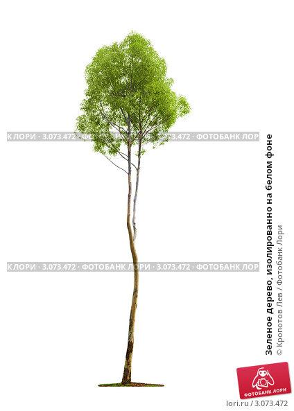 Купить «Зеленое дерево, изолированно на белом фоне», фото № 3073472, снято 5 мая 2011 г. (c) Кропотов Лев / Фотобанк Лори