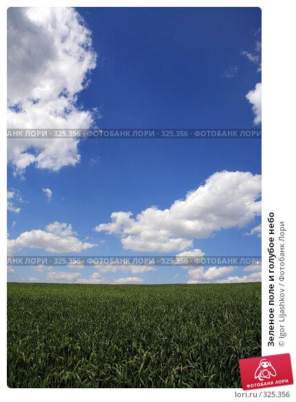 Зеленое поле и голубое небо, фото № 325356, снято 14 июня 2008 г. (c) Igor Lijashkov / Фотобанк Лори