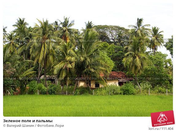 Зеленое поле и пальмы, фото № 111404, снято 16 июня 2007 г. (c) Валерий Шанин / Фотобанк Лори