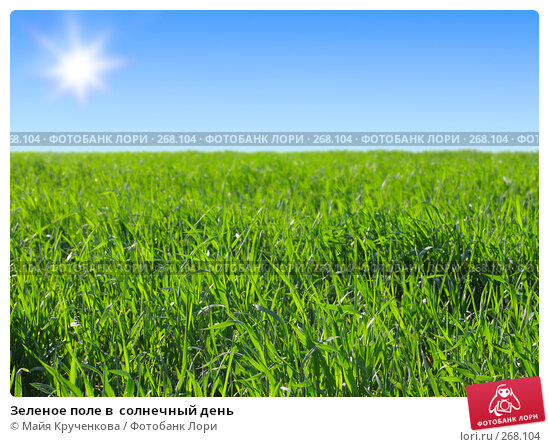 Купить «Зеленое поле в  солнечный день», фото № 268104, снято 26 апреля 2008 г. (c) Майя Крученкова / Фотобанк Лори