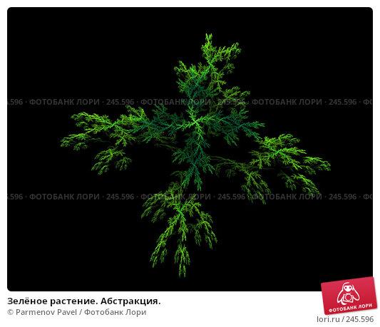 Купить «Зелёное растение. Абстракция.», иллюстрация № 245596 (c) Parmenov Pavel / Фотобанк Лори
