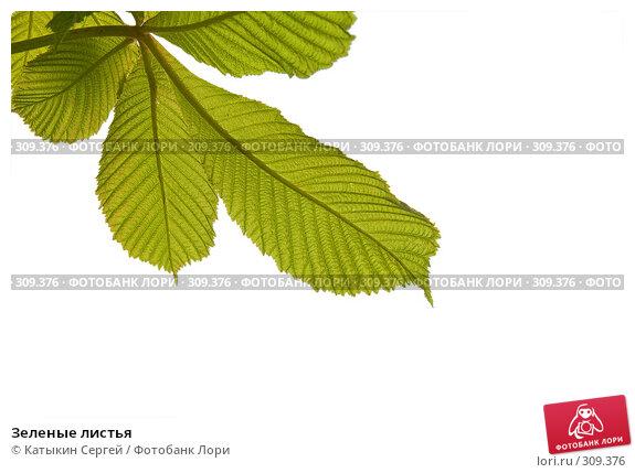 Зеленые листья, фото № 309376, снято 31 мая 2008 г. (c) Катыкин Сергей / Фотобанк Лори