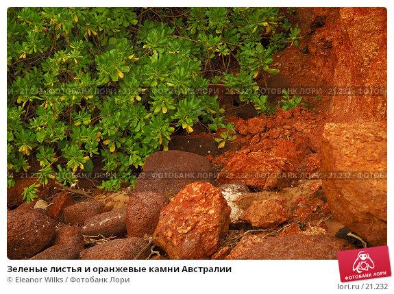 Зеленые листья и оранжевые камни Австралии, фото № 21232, снято 21 февраля 2007 г. (c) Eleanor Wilks / Фотобанк Лори