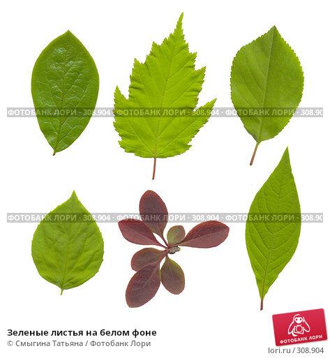 Зеленые листья на белом фоне, фото № 308904, снято 26 июня 2017 г. (c) Смыгина Татьяна / Фотобанк Лори