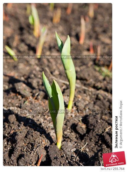 Зеленые ростки, фото № 255764, снято 15 апреля 2008 г. (c) Argument / Фотобанк Лори