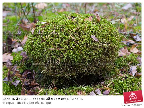 Зеленый ежик — обросший мхом старый пень, фото № 100892, снято 4 октября 2007 г. (c) Борис Панасюк / Фотобанк Лори