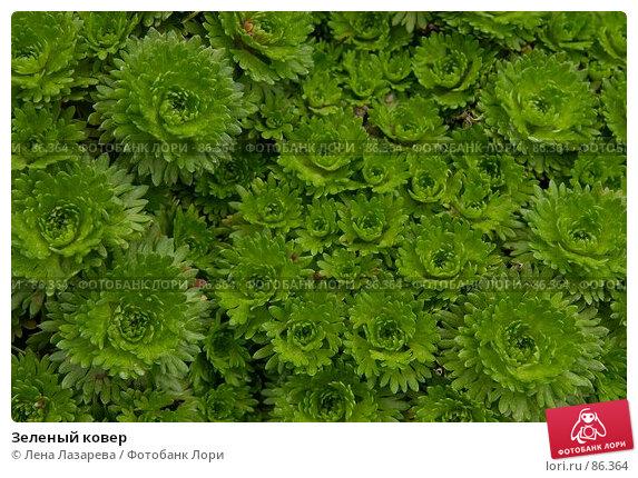Зеленый ковер, фото № 86364, снято 19 августа 2007 г. (c) Лена Лазарева / Фотобанк Лори