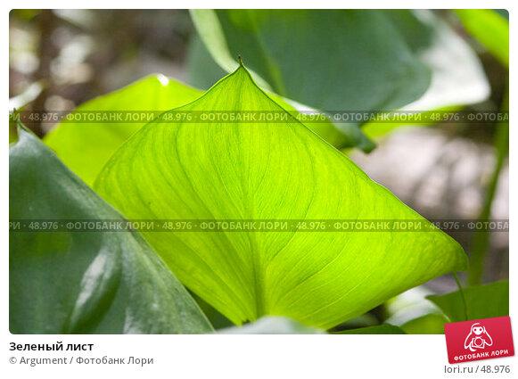Зеленый лист, фото № 48976, снято 16 июля 2006 г. (c) Argument / Фотобанк Лори