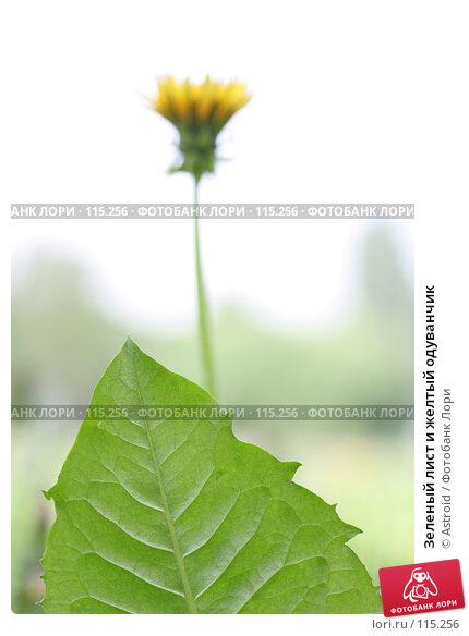 Зеленый лист и желтый одуванчик, фото № 115256, снято 29 мая 2007 г. (c) Astroid / Фотобанк Лори