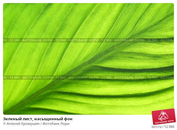 Зеленый лист, насыщенный фон, фото № 12980, снято 21 августа 2005 г. (c) Алексей Хромушин / Фотобанк Лори