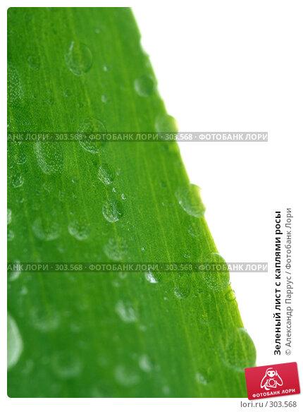 Зеленый лист с каплями росы, фото № 303568, снято 21 апреля 2008 г. (c) Александр Паррус / Фотобанк Лори