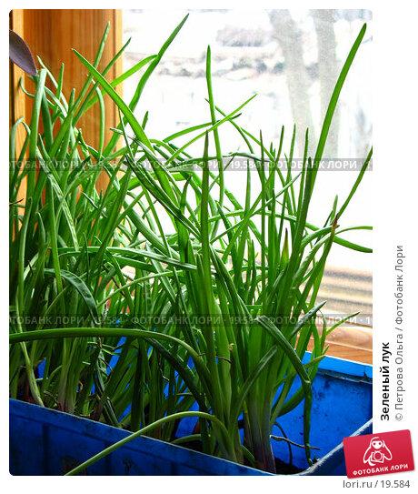 Зеленый лук, фото № 19584, снято 19 февраля 2007 г. (c) Петрова Ольга / Фотобанк Лори