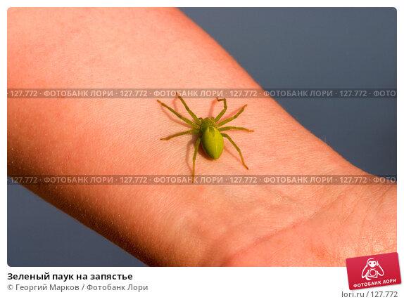 Зеленый паук на запястье, фото № 127772, снято 2 августа 2006 г. (c) Георгий Марков / Фотобанк Лори