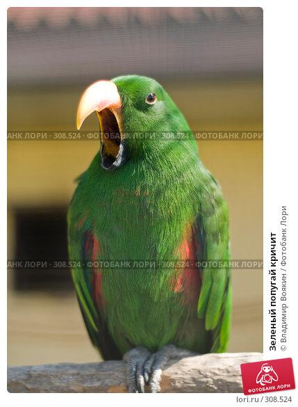 Зеленый попугай кричит, фото № 308524, снято 17 мая 2008 г. (c) Владимир Воякин / Фотобанк Лори