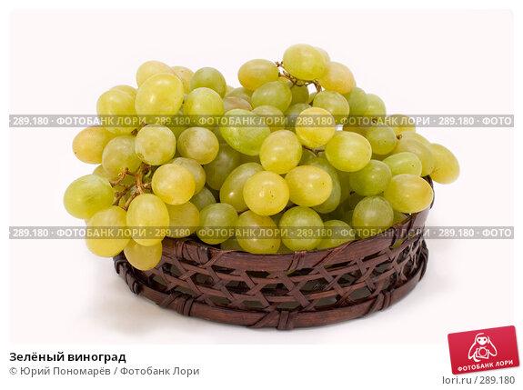 Купить «Зелёный виноград», фото № 289180, снято 6 мая 2008 г. (c) Юрий Пономарёв / Фотобанк Лори