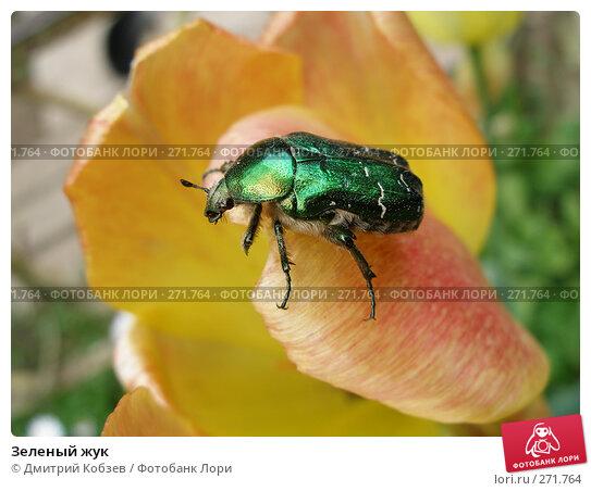 Зеленый жук, фото № 271764, снято 17 июня 2006 г. (c) Дмитрий Кобзев / Фотобанк Лори