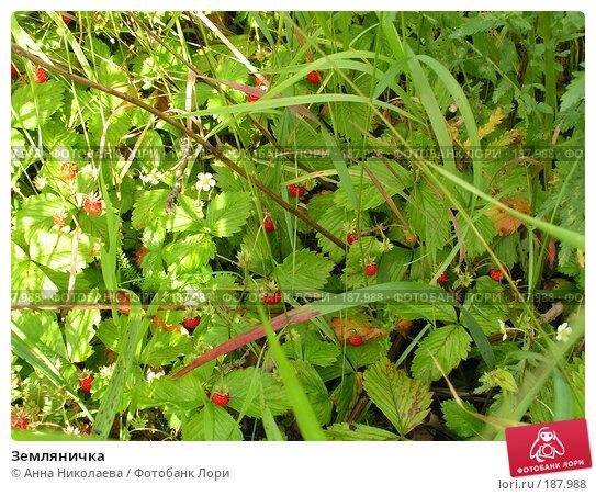 Земляничка, фото № 187988, снято 29 июня 2005 г. (c) Анна Николаева / Фотобанк Лори