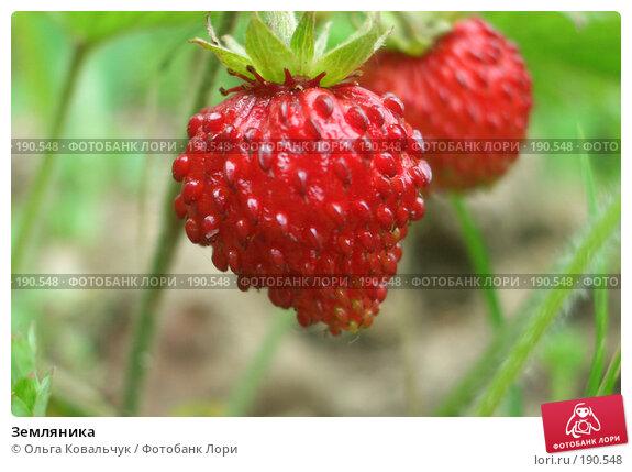 Купить «Земляника», фото № 190548, снято 3 июля 2004 г. (c) Ольга Ковальчук / Фотобанк Лори