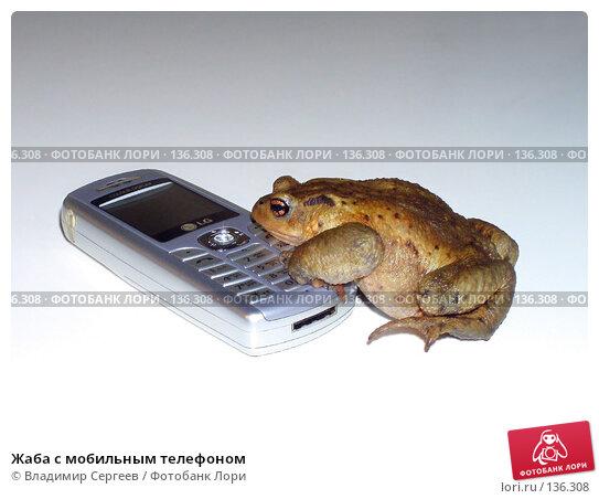 Жаба с мобильным телефоном, фото № 136308, снято 24 октября 2016 г. (c) Владимир Сергеев / Фотобанк Лори