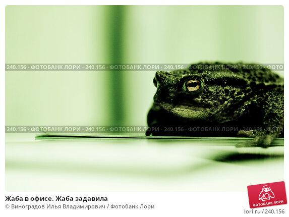 Жаба в офисе. Жаба задавила, фото № 240156, снято 25 октября 2007 г. (c) Виноградов Илья Владимирович / Фотобанк Лори
