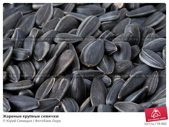 Жареные крупные семечки, фото № 18960, снято 22 февраля 2007 г. (c) Юрий Синицын / Фотобанк Лори