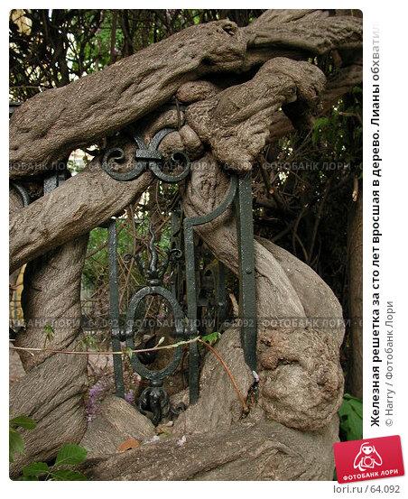 Железная решетка за сто лет вросшая в дерево. Лианы обхватили железную решетку, фото № 64092, снято 6 мая 2004 г. (c) Harry / Фотобанк Лори