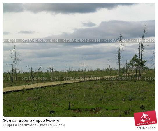 Желтая дорога через болото, эксклюзивное фото № 4144, снято 21 августа 2004 г. (c) Ирина Терентьева / Фотобанк Лори