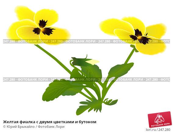 Купить «Желтая фиалка с двумя цветками и бутоном», иллюстрация № 247280 (c) Юрий Брыкайло / Фотобанк Лори