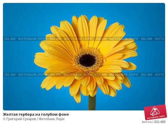Желтая гербера на голубом фоне, фото № 202488, снято 26 ноября 2006 г. (c) Григорий Сухарев / Фотобанк Лори